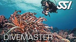 dive master